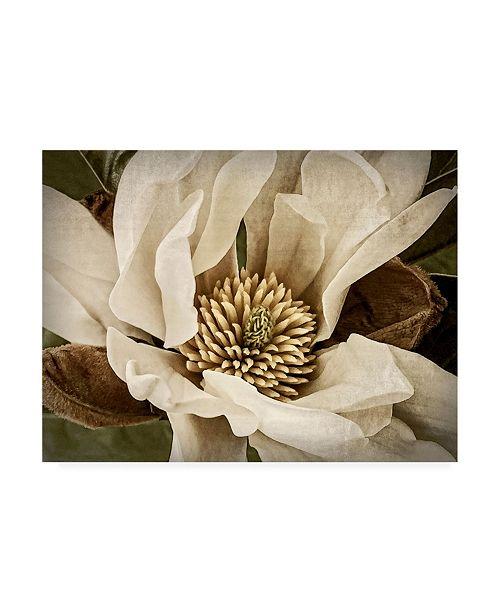 "Trademark Global Rachel Perry Classic Magnolia II Canvas Art - 37"" x 49"""