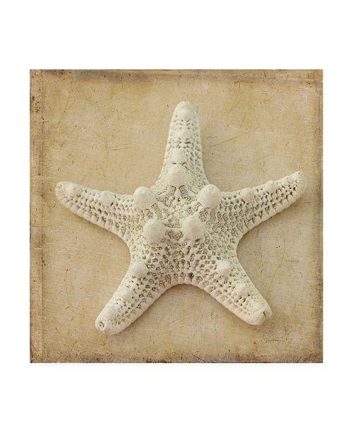 "Trademark Global Judy Stalus Sepia Shell I Canvas Art - 27"" x 33"""