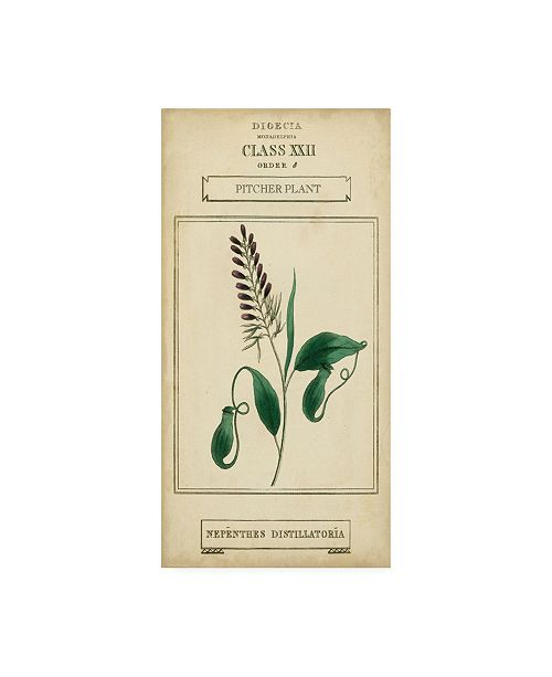 "Trademark Global Vision Studio Linnaean Botany II Canvas Art - 15"" x 20"""