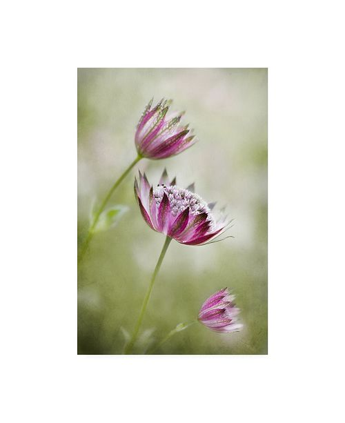 "Trademark Global Mandy Disher Astrantia Canvas Art - 37"" x 49"""