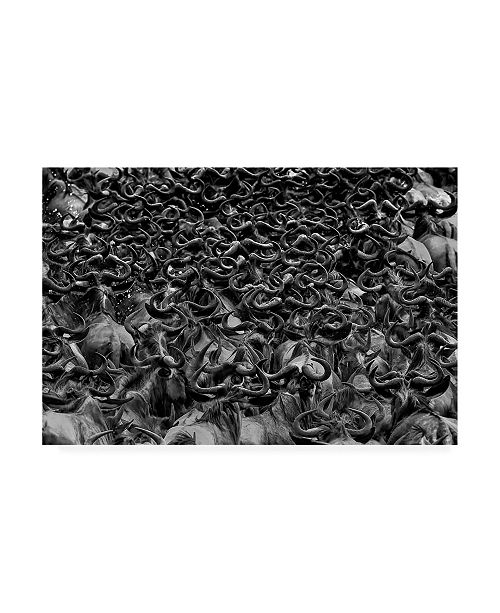 """Trademark Global Jun Zuo Wildebeest in Crossing Canvas Art - 15"""" x 20"""""""