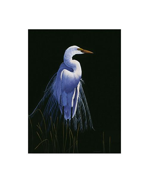 "Trademark Global Michael Budden Common Egret in Breeding Plumage Canvas Art - 37"" x 49"""