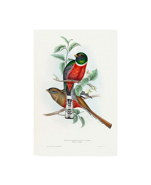 "Trademark Global John Gould Tropical Trogons V Canvas Art - 36.5"" x 48"""