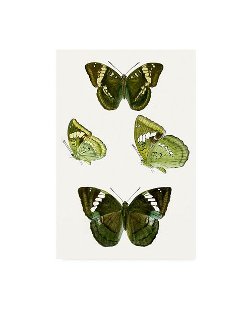 "Trademark Global Vision Studio Butterfly Specimen VII Canvas Art - 19.5"" x 26"""