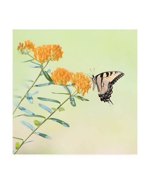 "Trademark Global PH Burchett Butterfly Portrait III Canvas Art - 36.5"" x 48"""