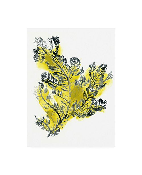"Trademark Global June Erica Vess Citron Sea Kelp IV Canvas Art - 36.5"" x 48"""