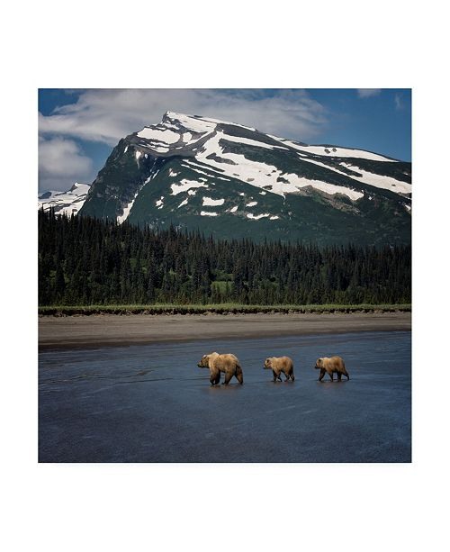 "Trademark Global PH Burchett Bear Life V Canvas Art - 36.5"" x 48"""