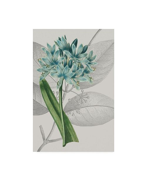 "Trademark Global Vision Studio Botanical Arrangement II Canvas Art - 36.5"" x 48"""