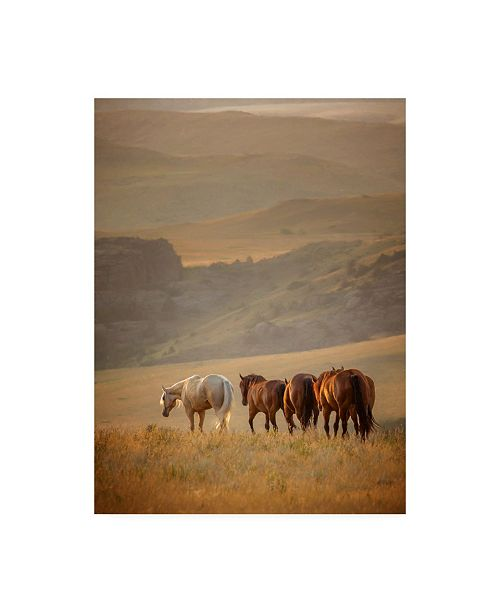 "Trademark Global PH Burchett Sunkissed Horses VI Canvas Art - 19.5"" x 26"""