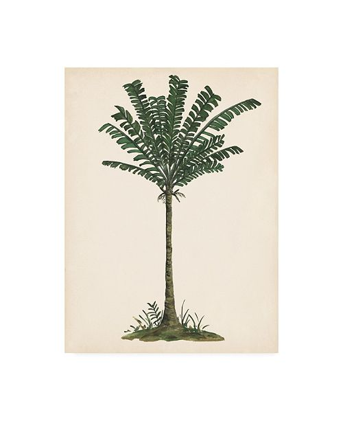 "Trademark Global Melissa Wang Palm Tree Study IV Canvas Art - 36.5"" x 48"""