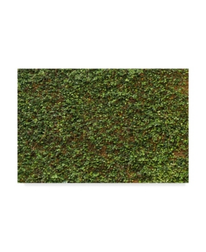 1X Prints Green Ivy Leaves Wall Canvas Art - 37