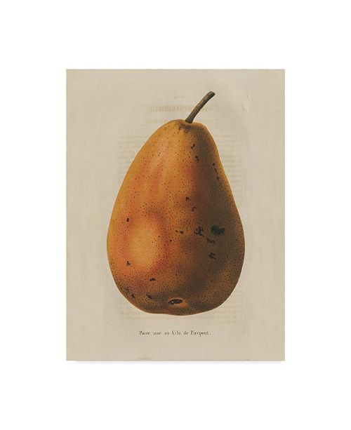 "Trademark Global Wild Apple Portfolio Pierpont V2 Canvas Art - 15"" x 20"""