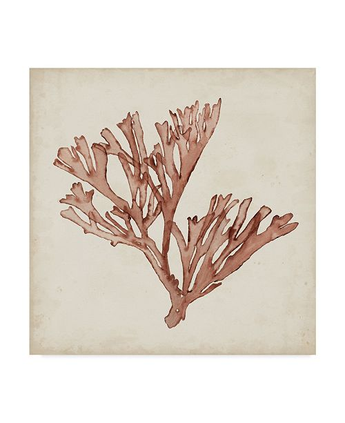 "Trademark Global Naomi Mccavitt Seaweed Specimens XIII Canvas Art - 20"" x 25"""