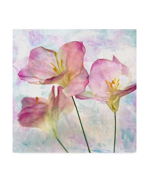 "Trademark Global Honey Malek Pink Hyacinth III Canvas Art - 15"" x 20"""