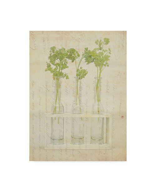 """Trademark Global Irena Orlov Herb Still Life I Canvas Art - 15"""" x 20"""""""