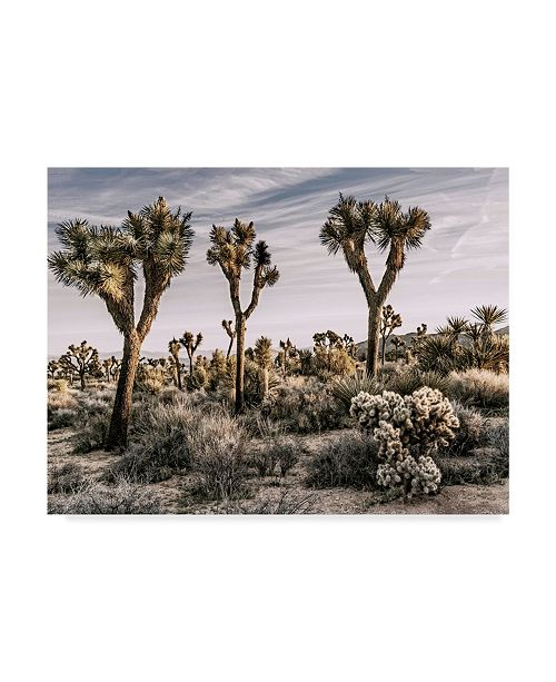 "Trademark Global Rachel Perry Views of Joshua Tree IX Canvas Art - 20"" x 25"""