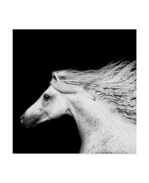 "Trademark Global PH Burchett Black and White Horses V Canvas Art - 20"" x 25"""