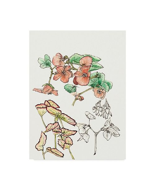 "Trademark Global Melissa Wang Begonia Study Canvas Art - 15"" x 20"""