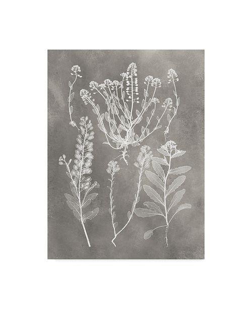 "Trademark Global Vision Studio Herbarium Study III Canvas Art - 37"" x 49"""