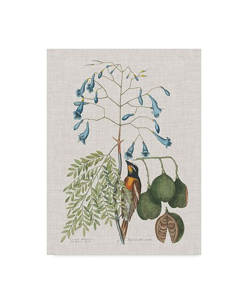 "Trademark Global Mark Catesby Studies in Nature II Canvas Art - 37"" x 49"""