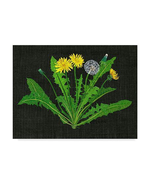 """Trademark Global Melissa Wang Wild Dandelion II Canvas Art - 37"""" x 49"""""""