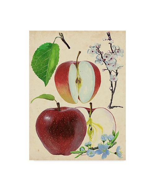 "Trademark Global Melissa Wang Apple and Blossom Study II Canvas Art - 37"" x 49"""
