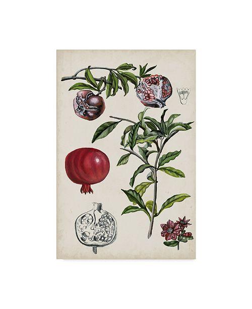 "Trademark Global Naomi Mccavitt Pomegranate Composition I Canvas Art - 37"" x 49"""