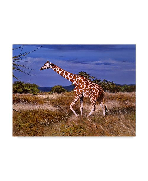 "Trademark Global Pip Mcgarry Reticulated Giraffe Canvas Art - 37"" x 49"""