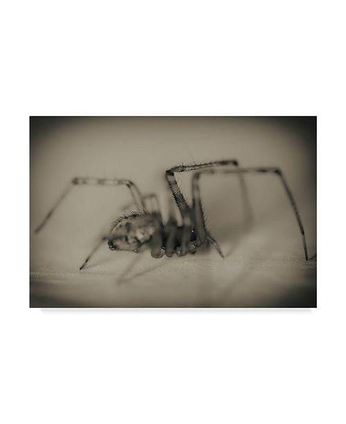 "Trademark Global Pixie Pics Spider 2 Canvas Art - 37"" x 49"""