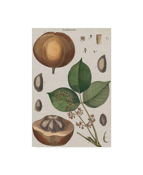 "Trademark Global Vision Studio Exotic Botanique III Canvas Art - 15"" x 20"""