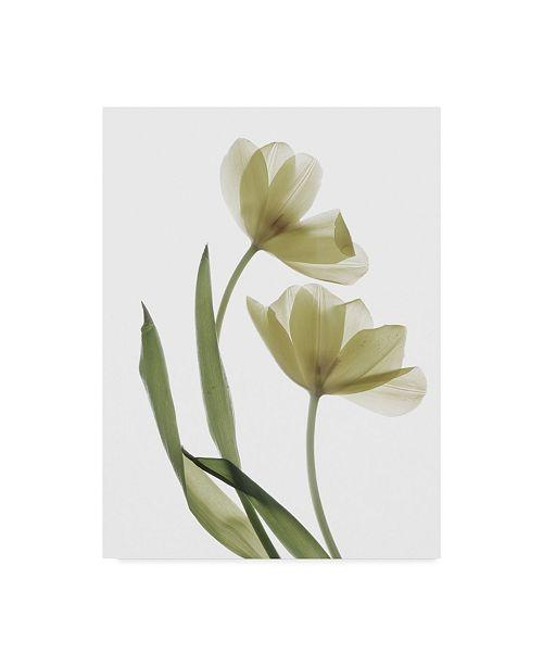 "Trademark Global Judy Stalus Xray Tulip I Canvas Art - 20"" x 25"""