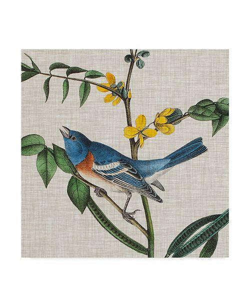 """Trademark Global John James Audubon Avian Crop VIII Canvas Art - 15"""" x 20"""""""