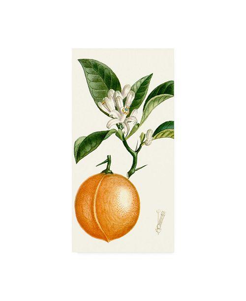 "Trademark Global Turpin Turpin Fruit IV Canvas Art - 20"" x 25"""