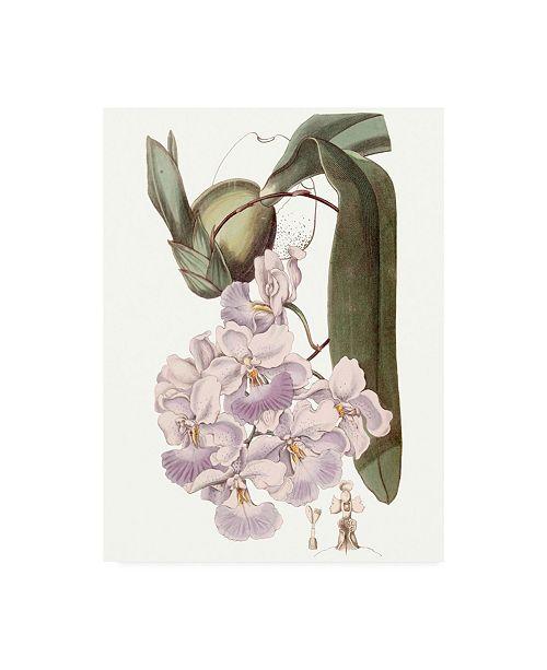 "Trademark Global Edwards Lavender Beauties V Canvas Art - 37"" x 49"""