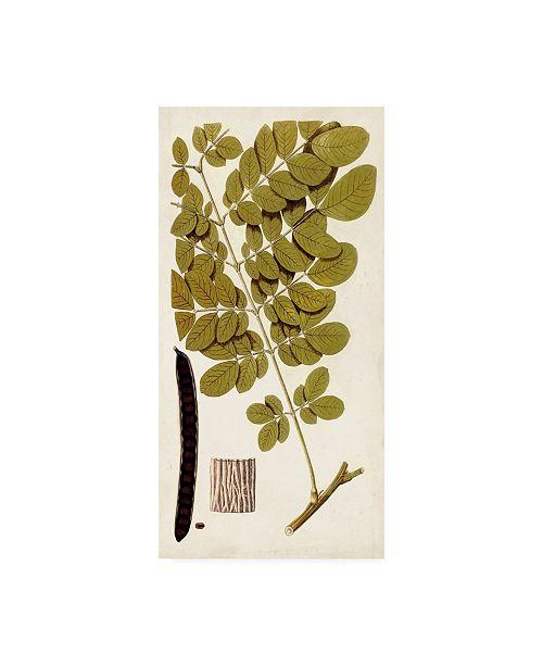"""Trademark Global Vision Studio Leaf Varieties I Canvas Art - 37"""" x 49"""""""