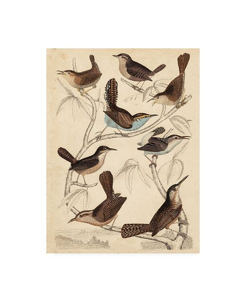 "Trademark Global Milne Avian Habitat VI Canvas Art - 37"" x 49"""