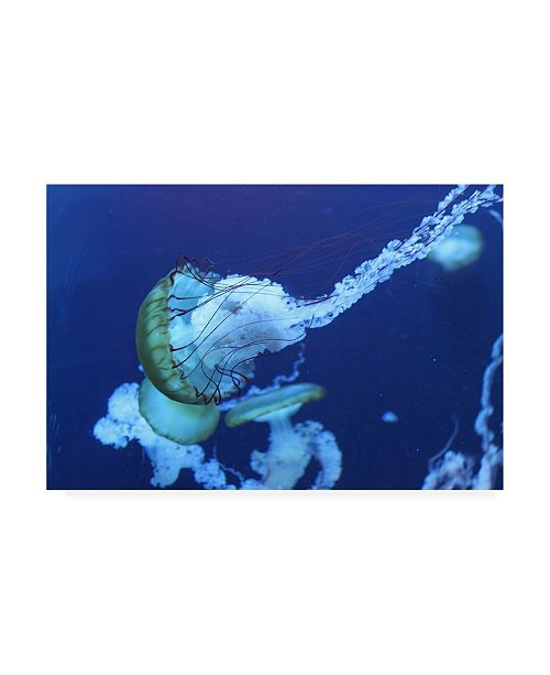 "Trademark Global PhotoINC Studio Jelly Canvas Art - 36.5"" x 48"""