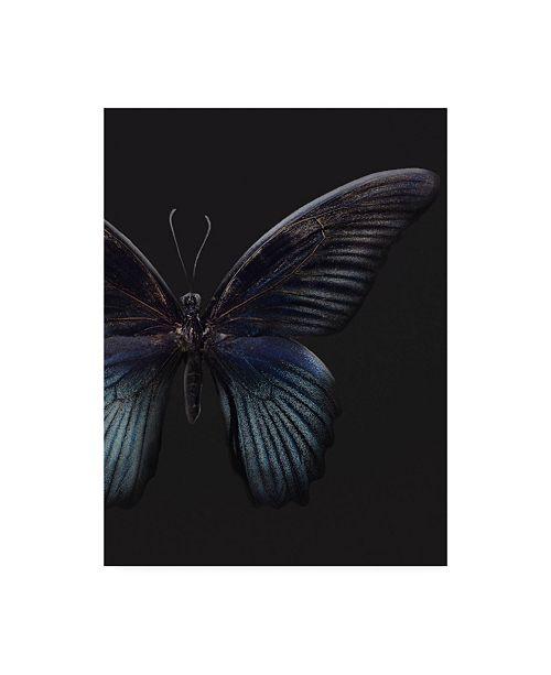 """Trademark Global Design Fabrikken Black Butterfly on Grey Fabrikken Canvas Art - 19.5"""" x 26"""""""