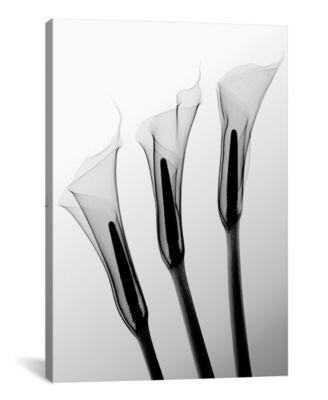 Callas I by Hong Pham Wrapped Canvas Print - 40