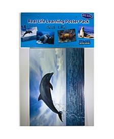 Real Photo Sea Life Poster Set