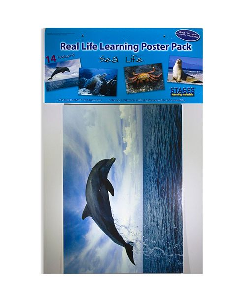 Stages Learning Materials Real Photo Sea Life Poster Set