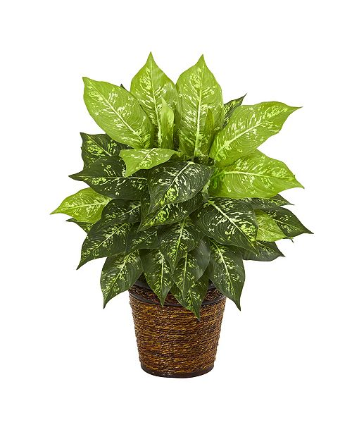 """Nearly Natural 19"""" Dieffenbachia Artificial Plant in Basket"""