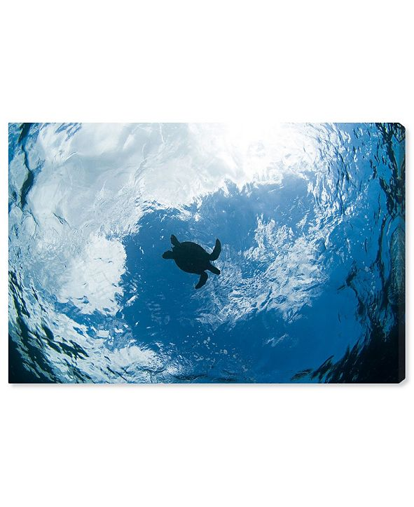 """Oliver Gal Green Sea Turtle From Below by David Fleetham Canvas Art, 24"""" x 16"""""""