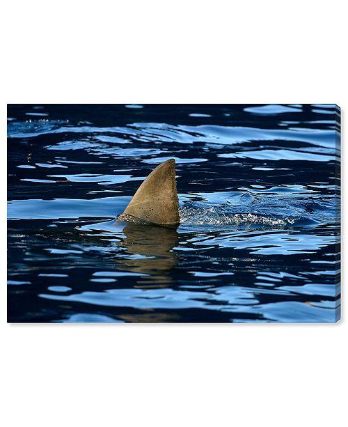 "Oliver Gal Great Whiteshark Fin, Shark Fin, Oceanshark Fin by David Fleetham Canvas Art, 45"" x 30"""