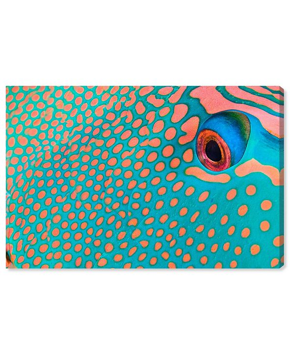 "Oliver Gal Bicolor Parrot Fish II by David Fleetham Canvas Art, 45"" x 30"""