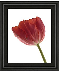 """Red Tulip by Art Photo Pro Framed Print Wall Art, 22"""" x 26"""""""