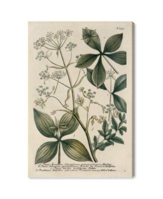 Herbs Canvas Art, 16
