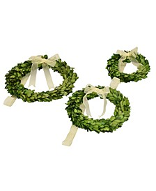 Preserved Boxwood Round Wreaths - Set of 3 Wreaths