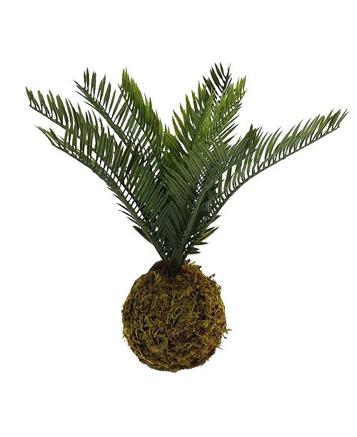 "Mills Floral 12"" Moss Ball with Palm Fern"