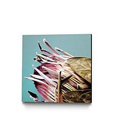 """Ivan Ballack Protea Cynaroides Museum Mounted Canvas 24"""" x 24"""""""